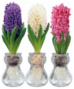 Hyacinth Trio Vase Set