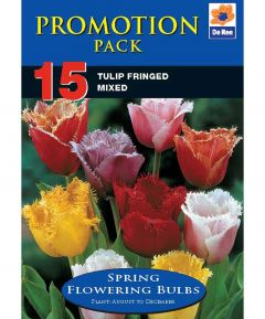 Tulip Fringed Mix - 15 Pack