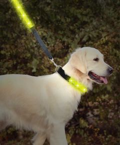 LED Pet Lead