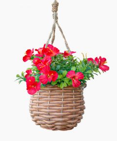 Hanging Basket Blossom - Pack of 2