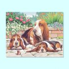 Painting By Numbers - Basset Hounds