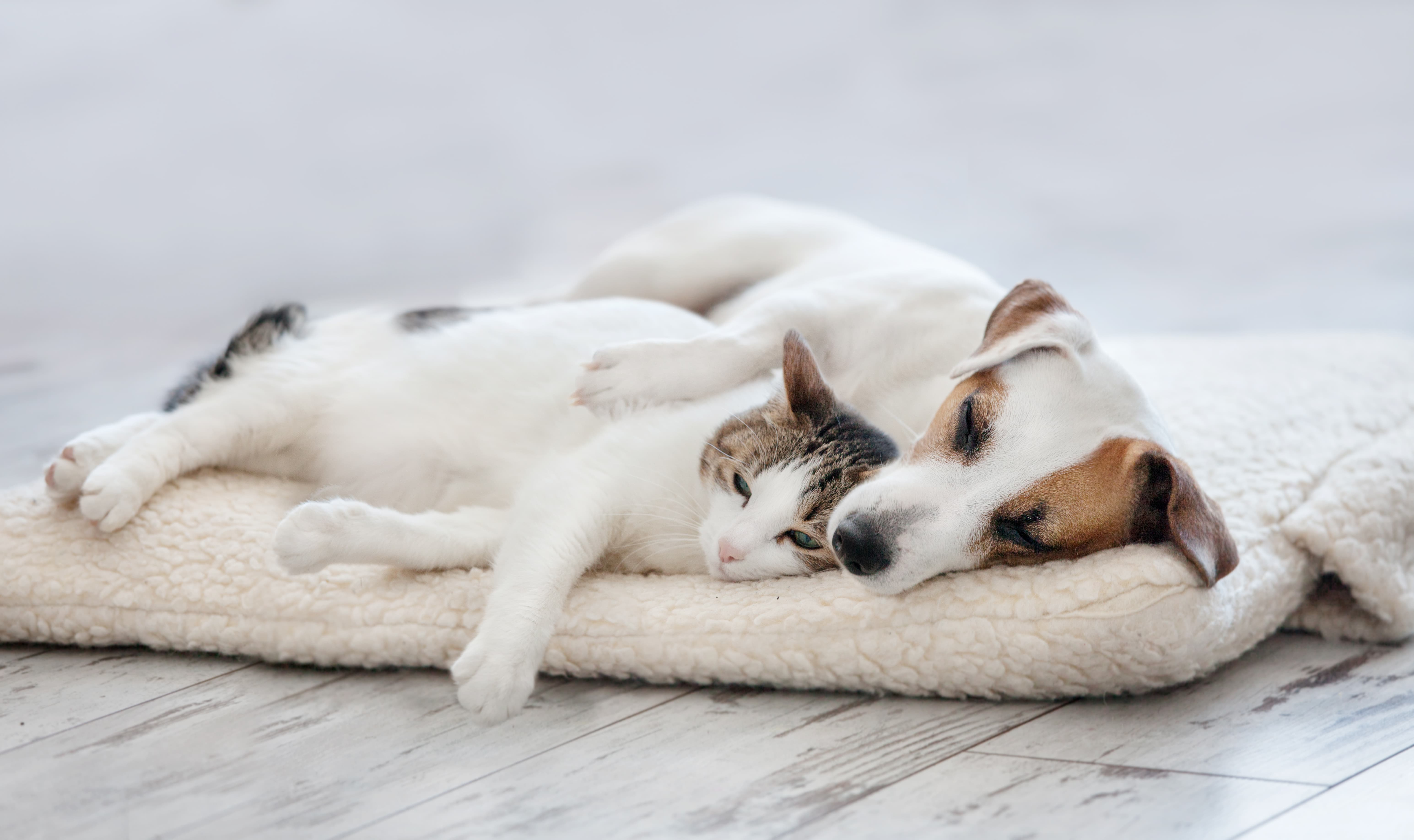 Our Top 5 Pet Essentials Picks!