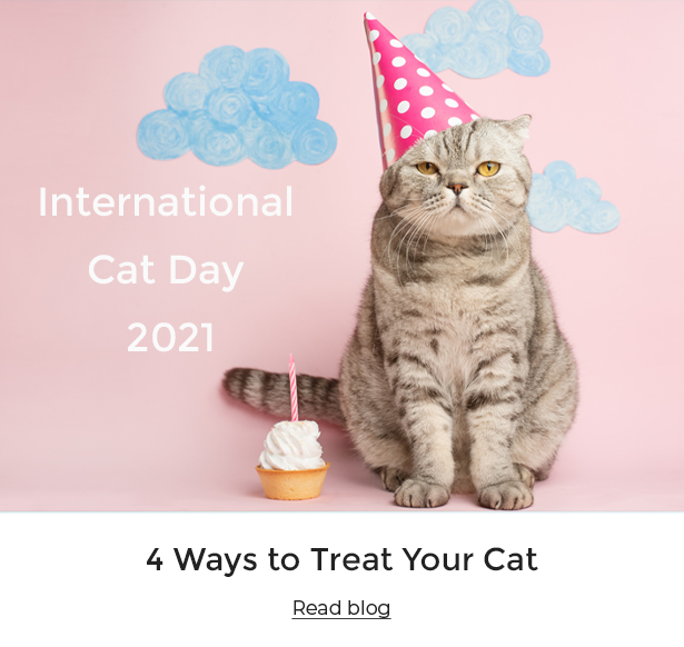 A cat wearing a party hat for International Cat Day 2021