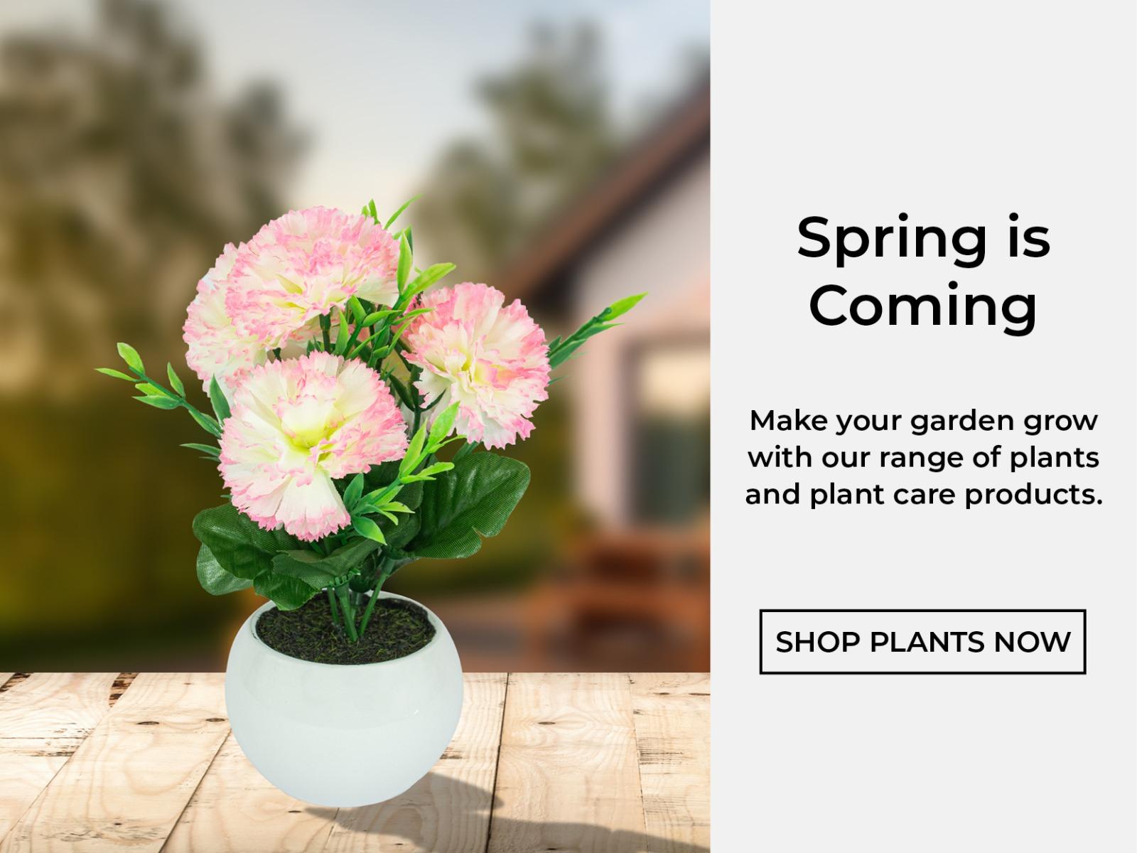Shop Plants Now